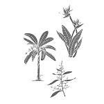 TROPICAL PLANTS (3) CLING MOUNTED RUBBER STAMPS