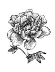 PEONY RUBBER STAMP AND MATCHING DIE COMBO