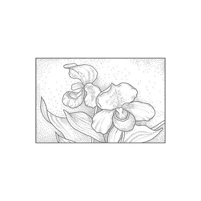 PACKET ORCHID (1) CLING MOUNTED RUBBER STAMP