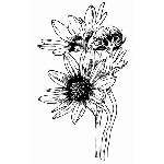 SUNFLOWER GROUP (1) CLING MOUNT RUBBER STAMP