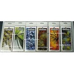 2020 fall designs background stamp combo set ( Buy 5 get 6th for free) Pre-order only