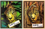 SAFARI ANIMALS (3) CLING MOUNTED RUBBER STAMPS TWO